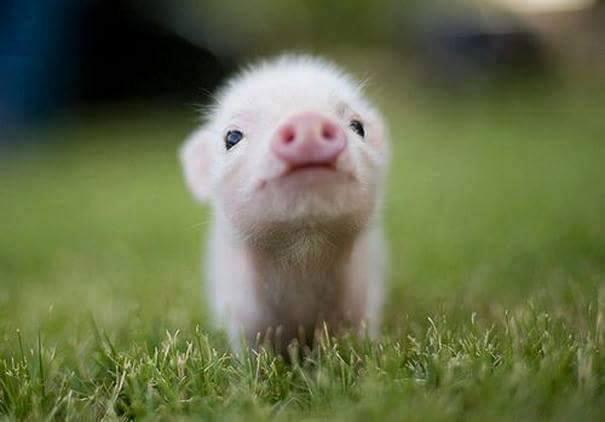 lindos%2Banimais%2Bbebe%2B%2B%252820%2529 - Os filhotes de animais mais lindinhos que você já viu!