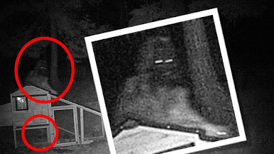 Bigfoot Shot While Stealing Chickens