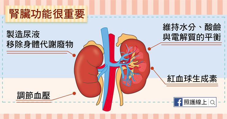 慢性腎衰竭 – 洗腎與腎臟移植(懶人包) - 照護線上