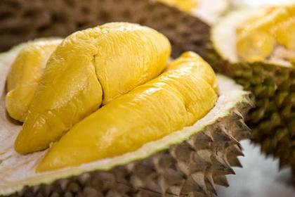 Kaget ! Terbongkar Cara Menanam Durian Batang Pendek, Buah Lebat dan Berukuran 'Raksasa'