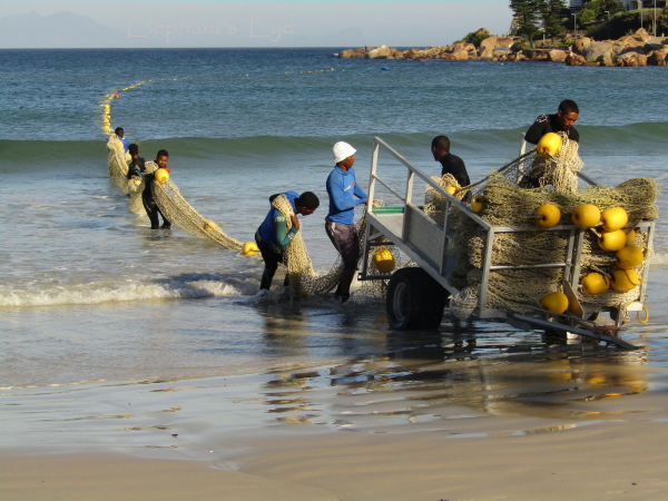 Bringing in the Fish Hoek shark net