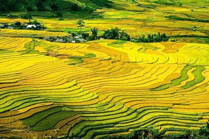 Pengertian Konsolidasi Tanah di Indonesia