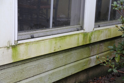 why is the outside of my house green and how do i clean it rh greenseasonsusa blogspot com