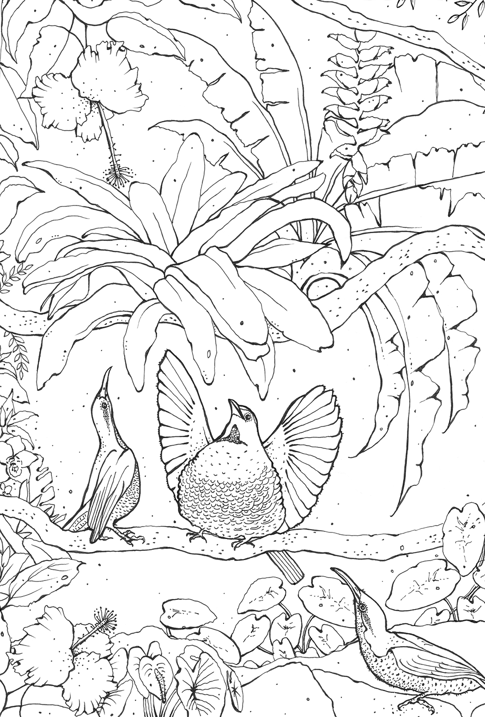 Tropical Birds Coloring Pages For Kids