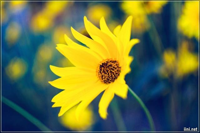 wildflower img