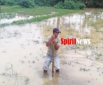 Daeng Rumpa Ahli Waris  Almarhum Batjo, Pasang Batas Tanahnya di Dusun Pattiro Desa Paccellekang