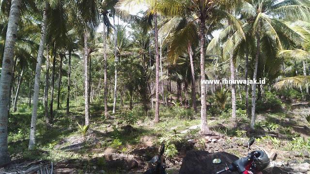 Pantai Slah Munjungan Banyak Pohon Kelapa
