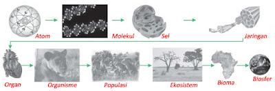 struktur organisasi kehidupan sebagai objek kajian biologi