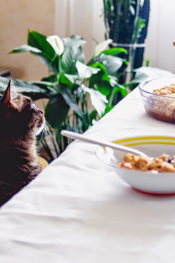 Brown rice pudding with roasted plums thisisasweetblog recipe breakfast cat