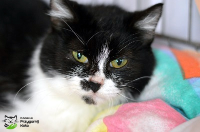 kot, koty do adopcji Wroclaw