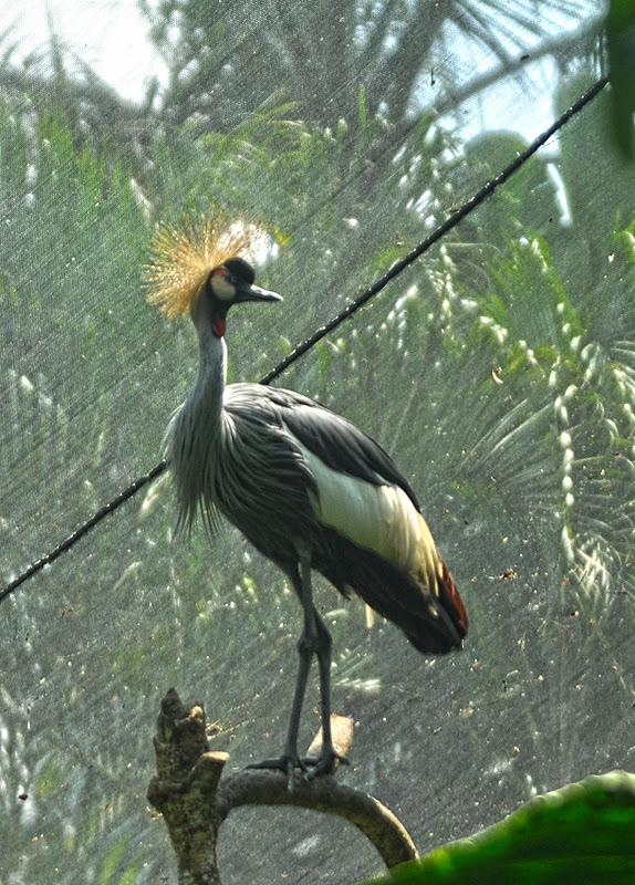 Burung+9 Taman Burung Bali