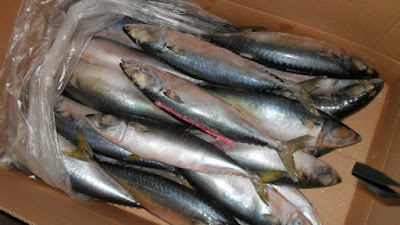 Price of Frozen Fish Mackerel Products