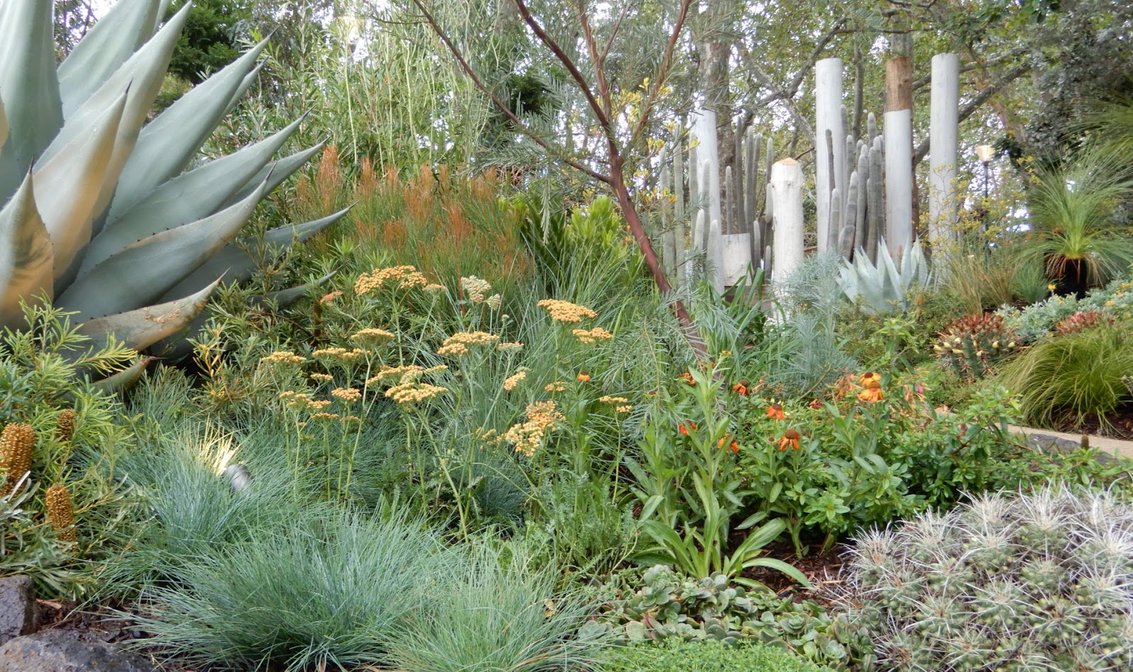 the garden at possum creek: mifgs 2017 - and more on dahlias