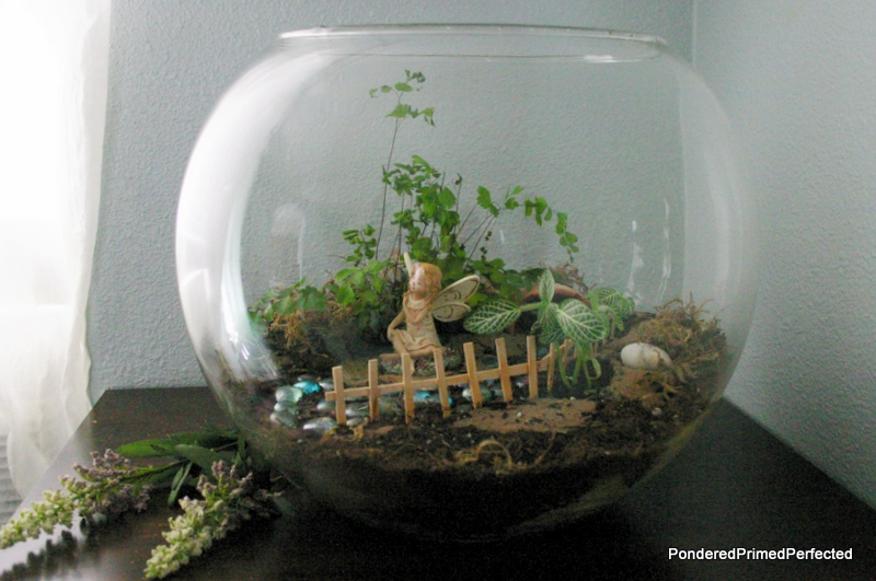 Pondered Primed Perfected Fairy Garden Terrarium