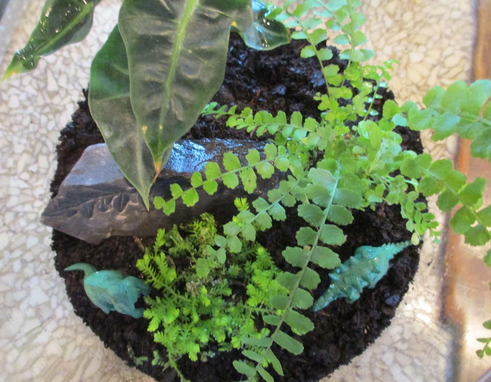 Lemon button fern terrarium