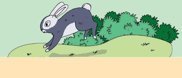 Image result for kelinci melompat menggunakan kaki bagian