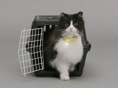 collar para gato