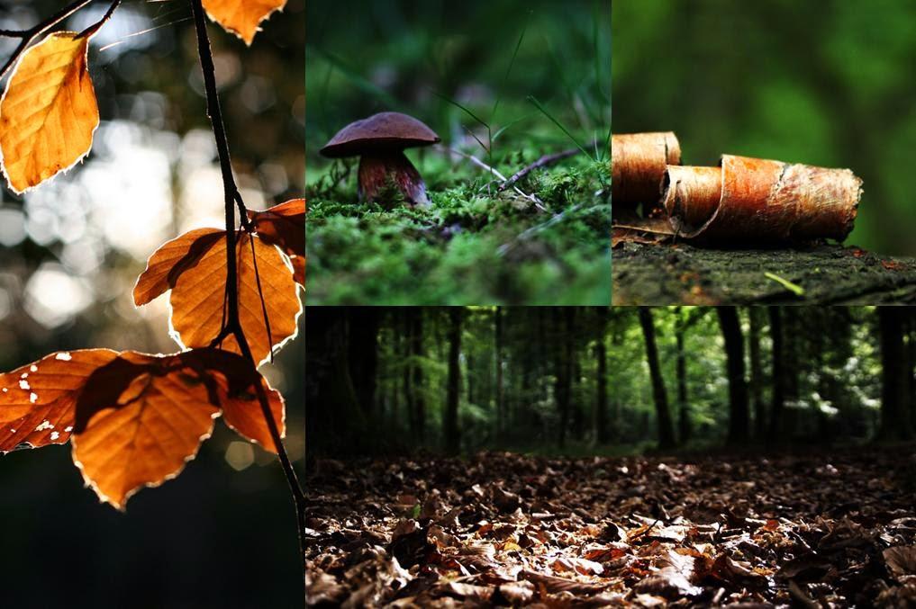 Cueilleur d'arbres - Lorenzo Pellegrini