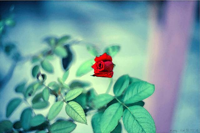 ေမာင္ေမာင္စုိး ● ႏွင္းဆီနီနီ အိပ္မက္မ်ား – အပိုင္း (၁)