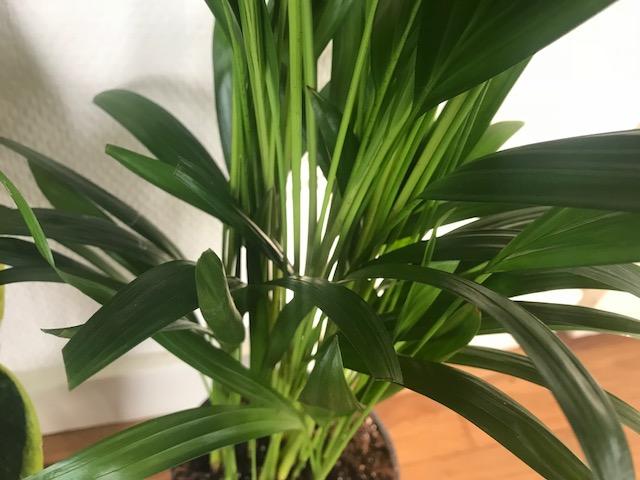 planten voor tropische vibes in huis