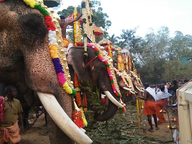 elephant kerala festival