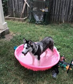 Water, summer, pool, fun, puppies