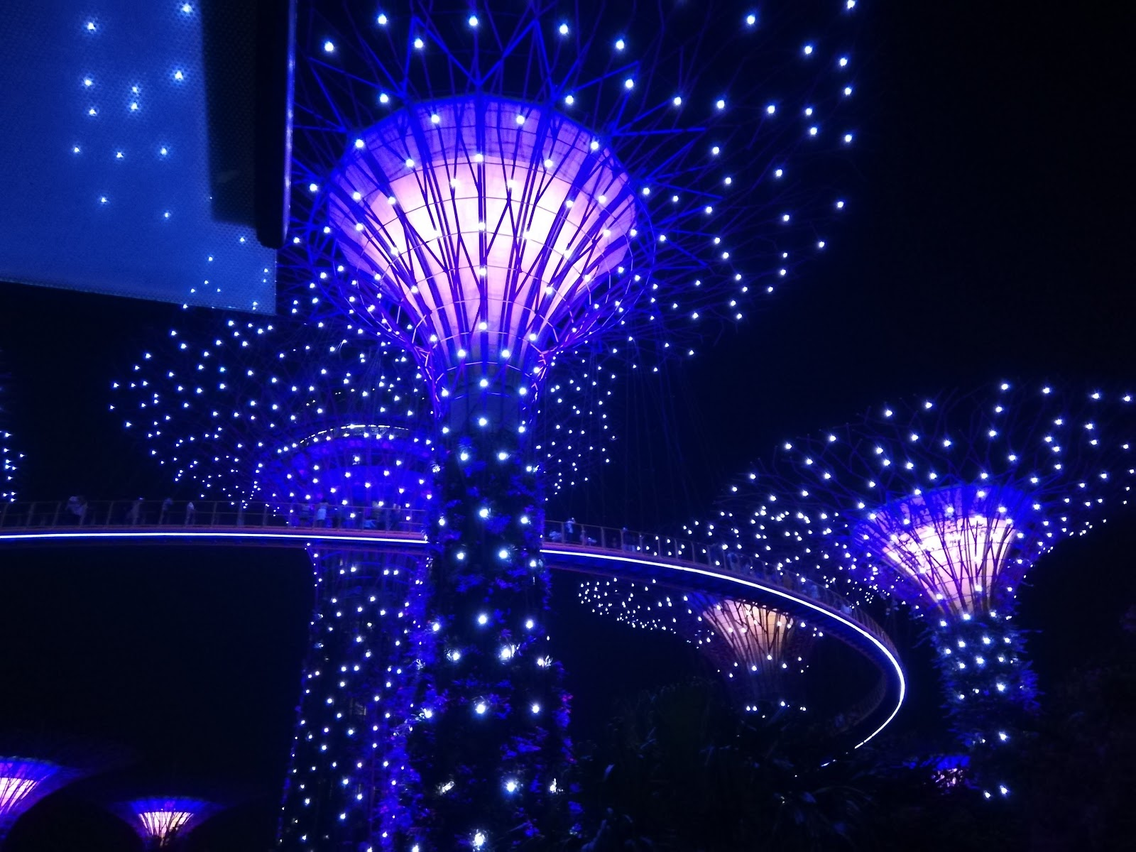 at night the super trees are lit up and there are two light music shows one at 7 45pm and again at 8 45pm the gardens close at 2am