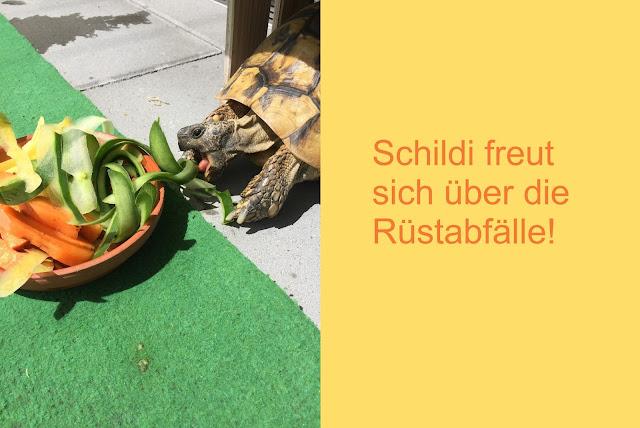 Schildkröte frisst Rüstabfälle