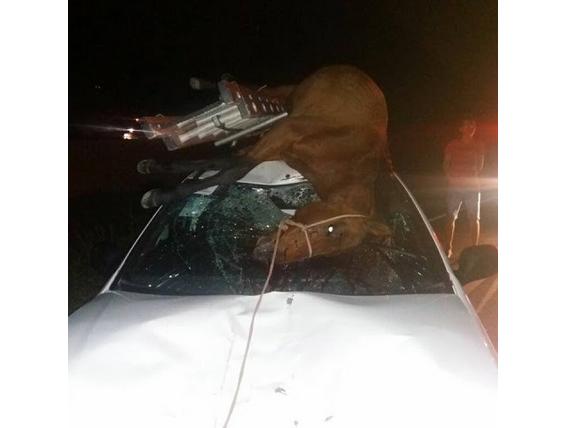 Em Água Branca, homem sai ileso após colidir veículo  em um  cavalo na AL-145