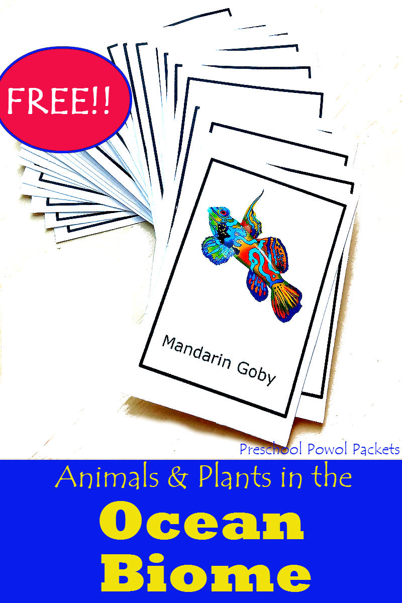 {FREE} Ocean Animals & Plants Cards | Preschool Powol Packets