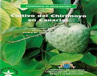 cultivo-del-chirimoyo-en-canarias