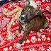 ΑΡΝΗΤΙΚΟ ΡΕΚΟΡ στους σκύλους που εγκαταλείφθηκαν τα Χριστούγεννα...