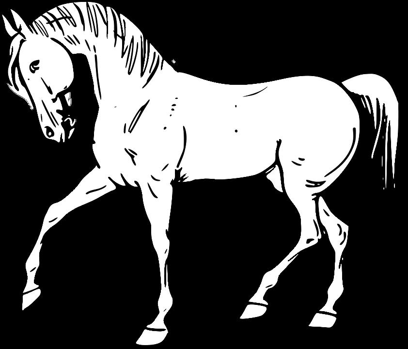 Informasi Belajar Anak Interaktif Download Mewarnai Gambar Kuda