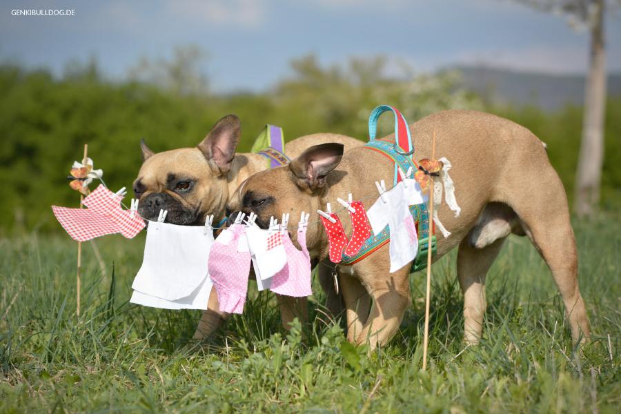 Hundeblog Monatspfoto Frühlingsfrische