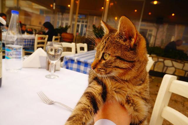 Кошка-Грек