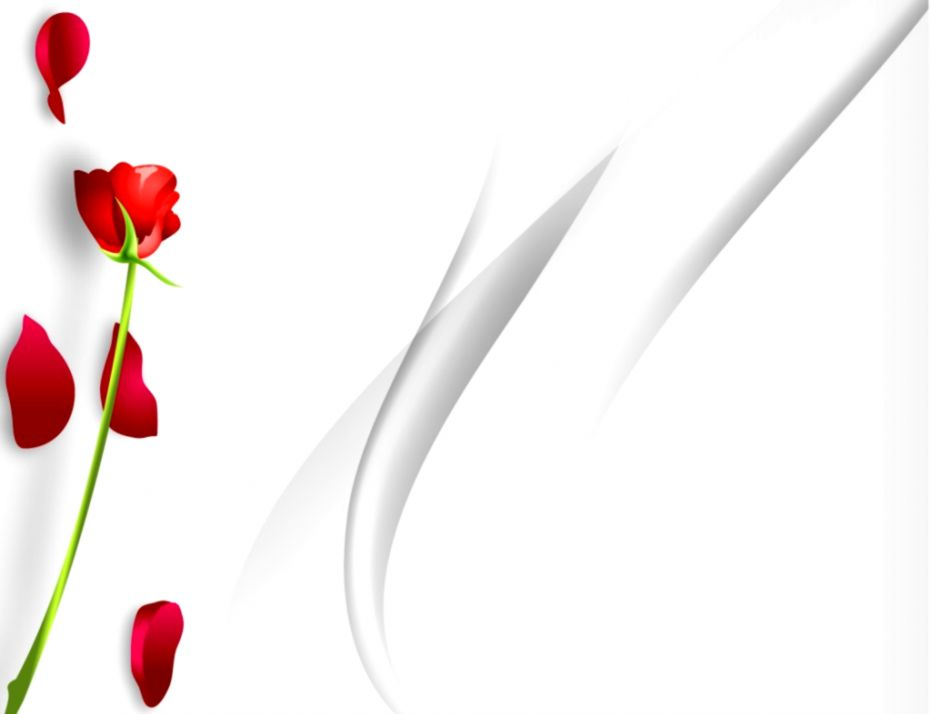 White Rose Powerpoint Background Wallpapers Engine