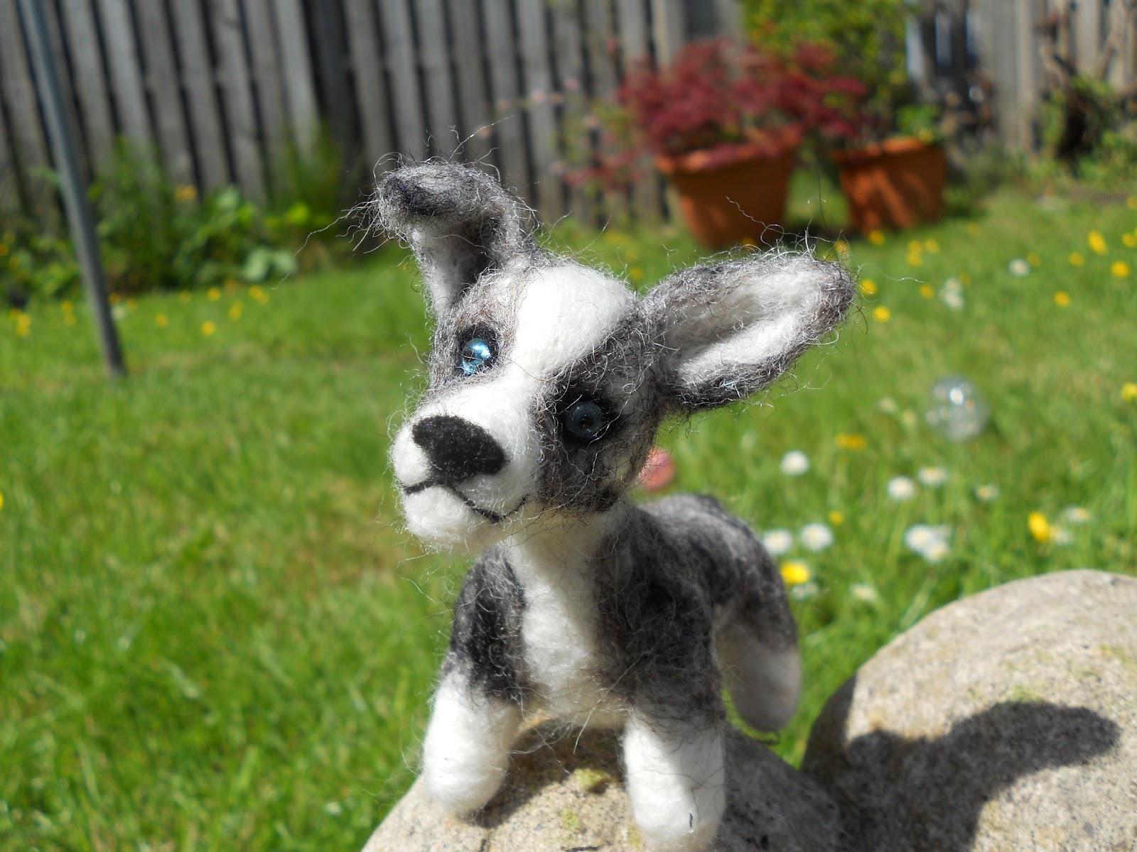 Agility Dog Breeds - Dog Breeds - photo#35