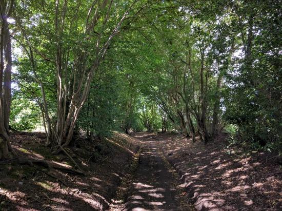 Photograph of a deep, shaded byway along Walk 54: Symondshyde Loop