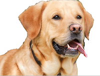 10 lines on dog in Hindi