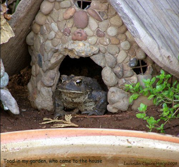 how to make a frog habitat for a childcare