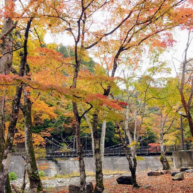 滝沢ダム貯水池上流端広場 紅葉