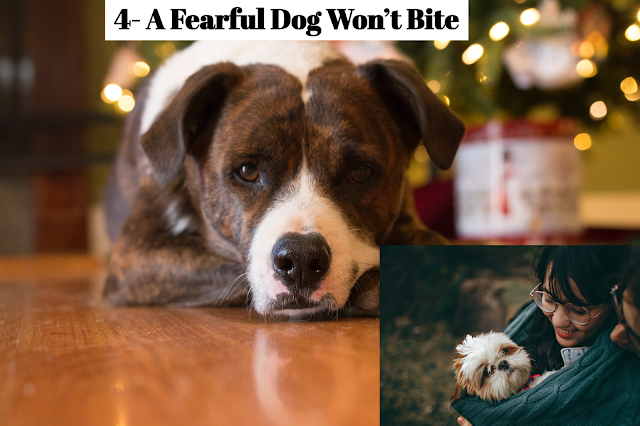 Fearful animals are, in fact, more likely to bite than dominant  animals.  Panic drives fearful dogs to do anything to reduce the presence of a threat. Further, when you retreat from a dominant dog, he'll stop any further threat of aggression: In essence, you did what he asked. When you retreat from a fearful dog, however, he may still rush and snap as your presence is still a potential threat. He's afraid that you may still return to hurt him, so his emotions may well swamp any logical thinking about the situation. You should view all frightened animals as potentially aggressive.