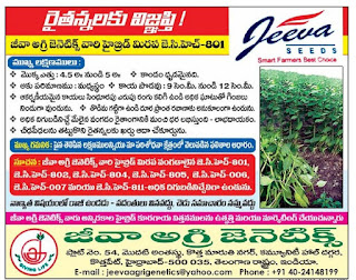 jeeva agri genetics hyderabad