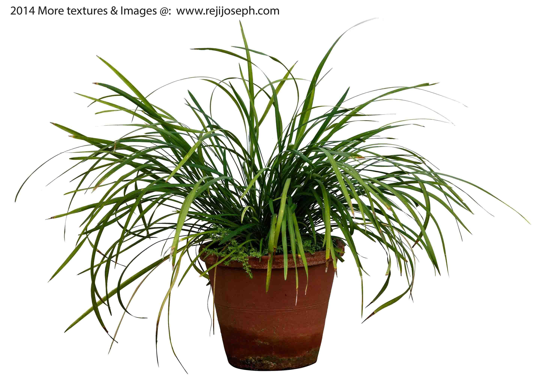 Garden Plant texture 00012