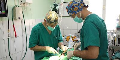 Hirurško uklanjanje karcinoma psa