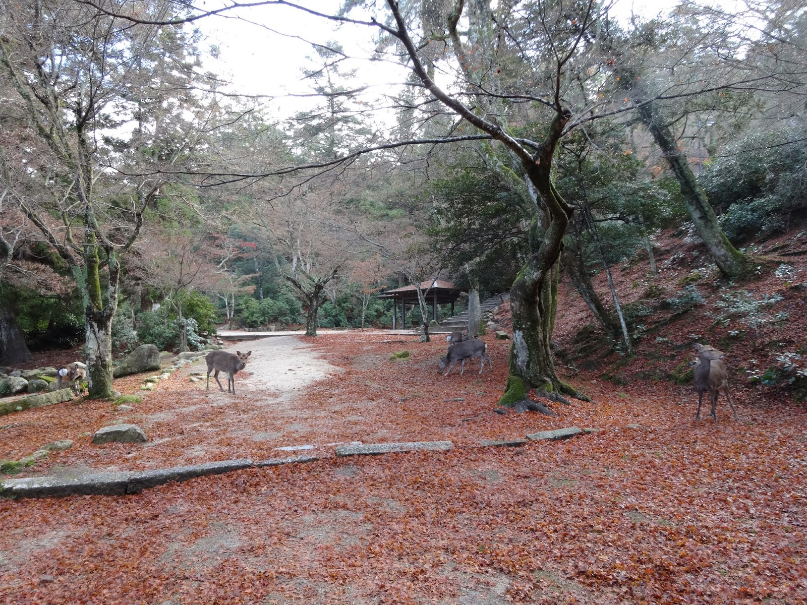 Deer park on Miyajima Island