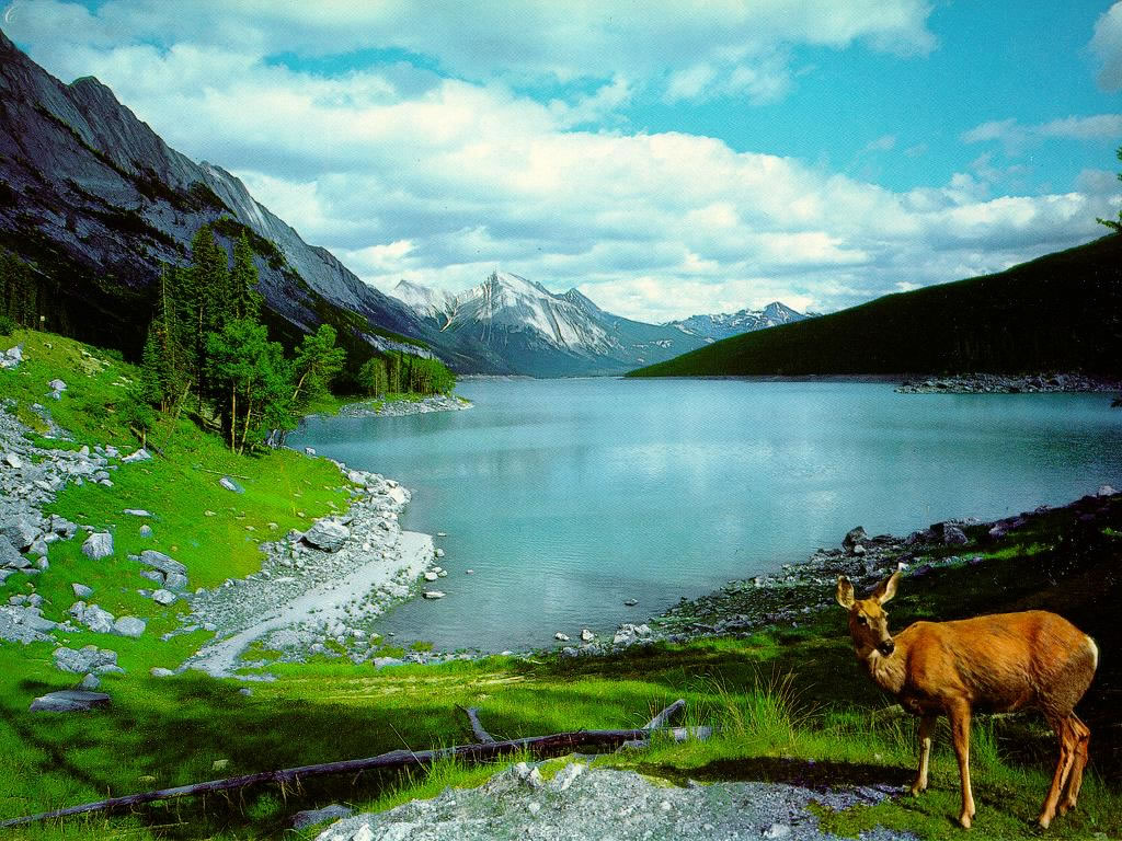 high definition nature wallpaper - photo #24