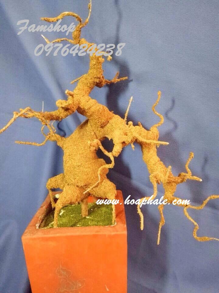 Goc bonsai mai dao o Nguyen Quyen