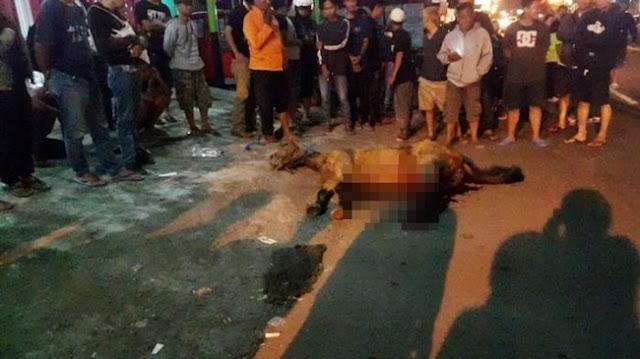 Kasihan, Kuda Ini Mati Karena Kaget dengar Klakson Bus