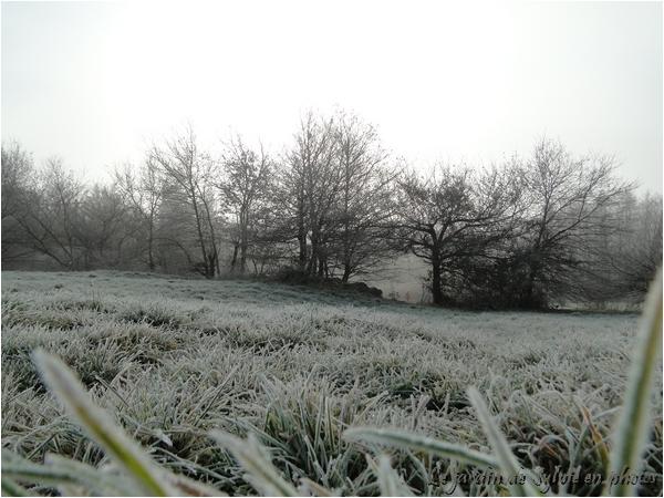 Pthoto Promenade matinale en hiver...